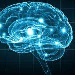Le retour sous condition des cerveaux