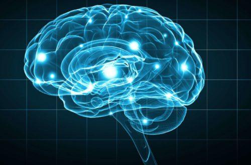 Article : Le retour sous condition des cerveaux